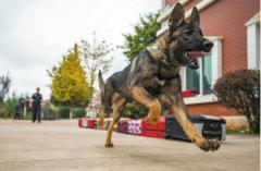 警犬可以克隆 幸福人生却只能是吉利远景相伴