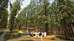 """揚州""""水上森林""""吸引游客前來避暑"""