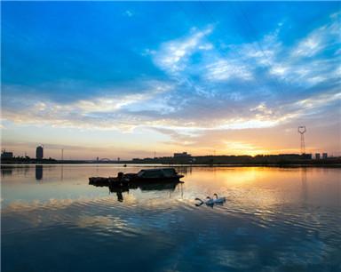 安徽颍上:白鹅浮清波 颍河风光美