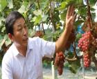 創客歸去來|張覺林:種植小葡萄 收獲大智慧