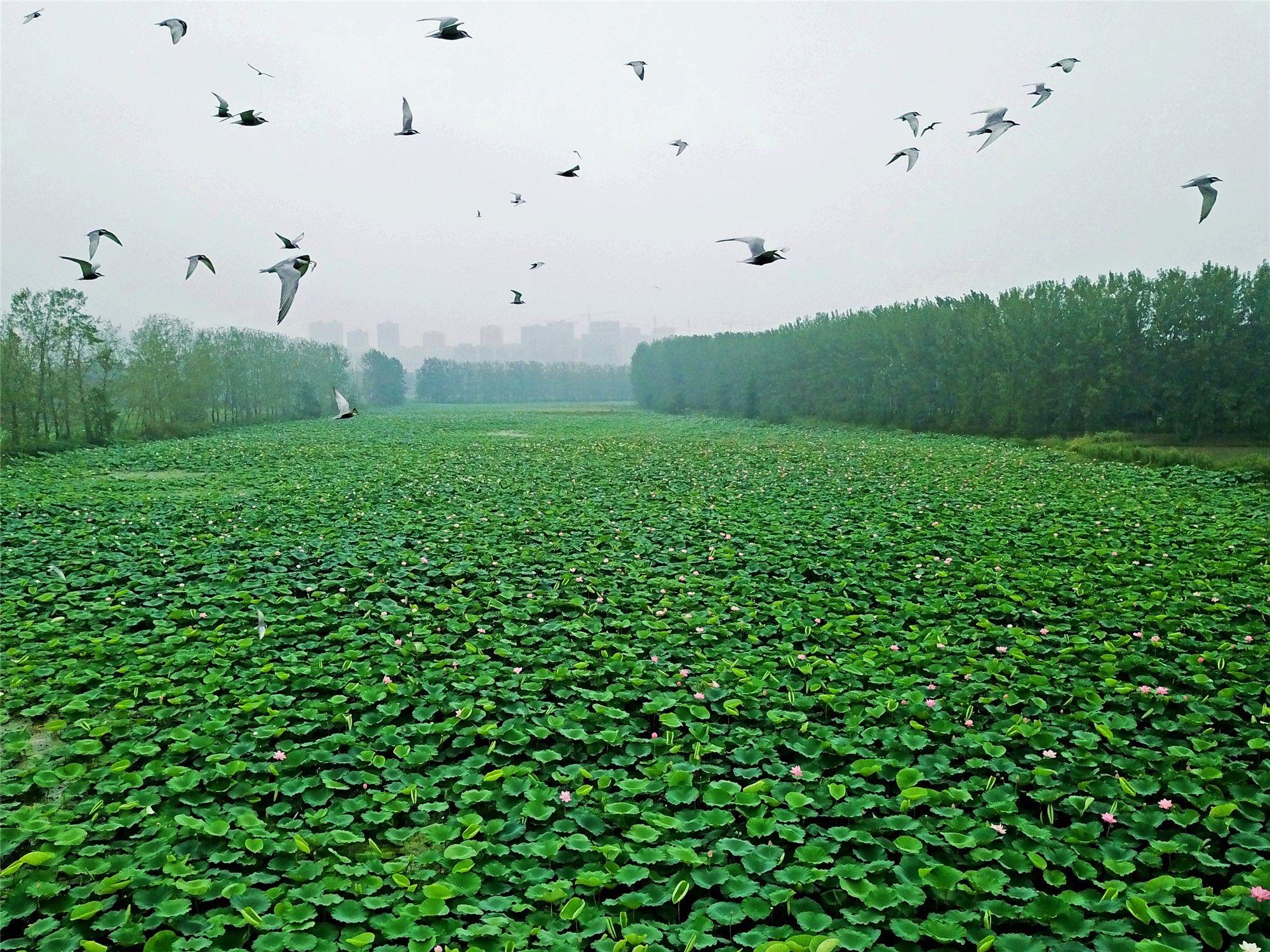 28.湿地生态美