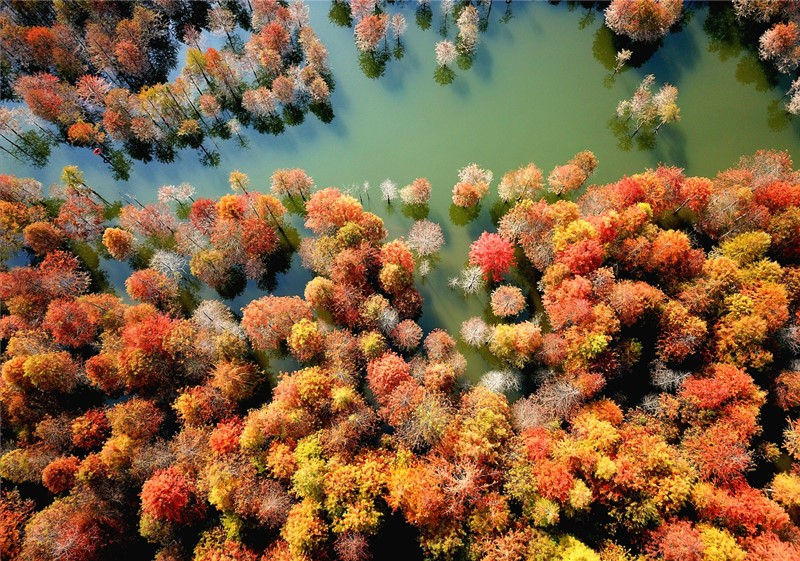 53杉语诉秋——池杉湖湿地公园