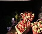 商丘周集鄉草莓豐產 1200畝草莓基地周末嗨起來