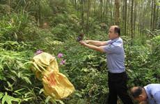 非法销售濒危野生保护动物 违法者义工劳动代刑罚