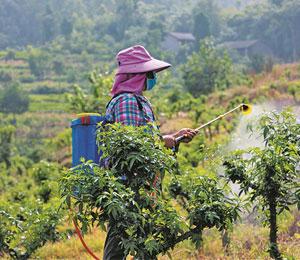 豐都:荒山種上花椒樹 村民致富有門路