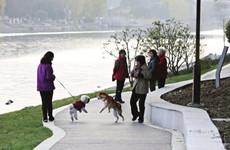 西安将整治遛犬不拴绳 违规养犬等不文明行为