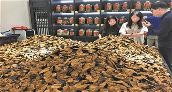 江门:全产业链保护新会陈皮 推动陈皮产业健康发展