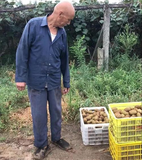 100�f斤周至�J猴桃盼�N路,29.9元5斤��坌�鬟f