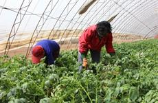 宝鸡市生态扶贫取得显著成效 惠及八万贫困人口