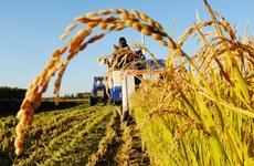 2019年中国农民丰收节陕西组织100余场重大活动