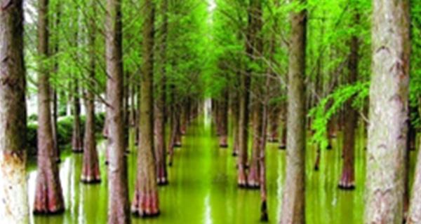 """广东明年湿地公园将达280个 湿地保护率达52%""""class="""