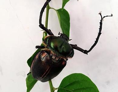 靖安发现的这个虫子不一般