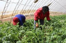 省教育厅:陕西实施高素质农民学历提升行动计划
