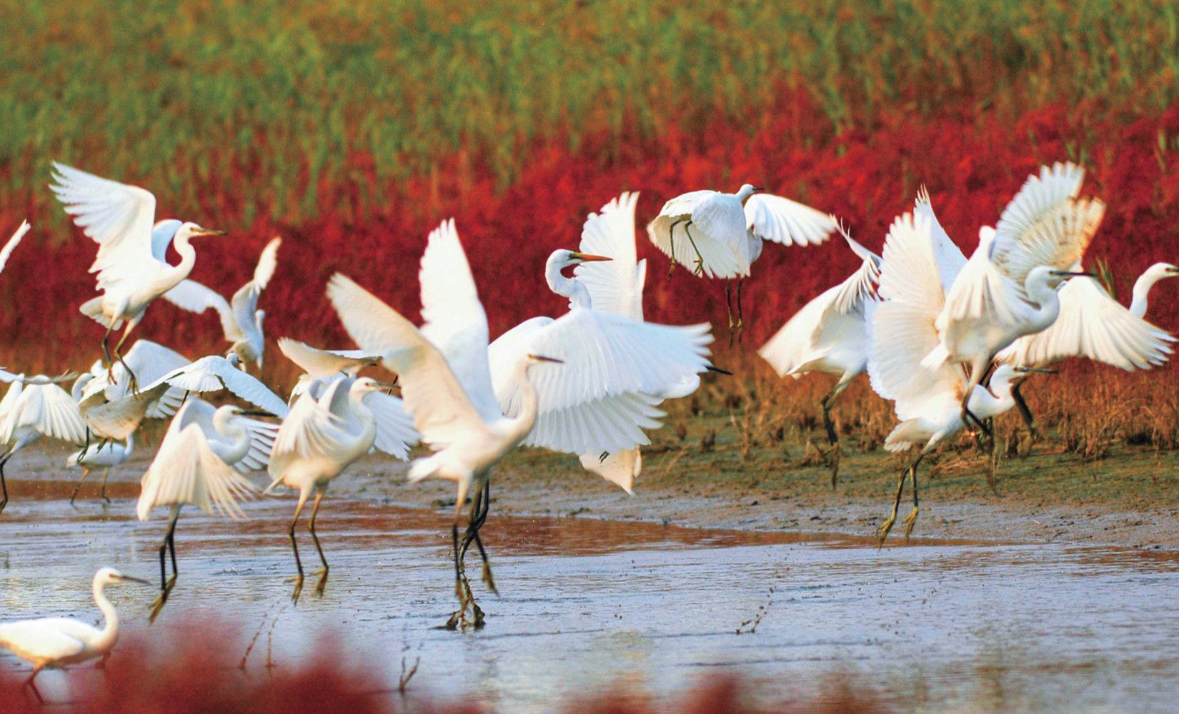 """东营湿地保护样本:生态好不好, 鸟说了算"""" width="""