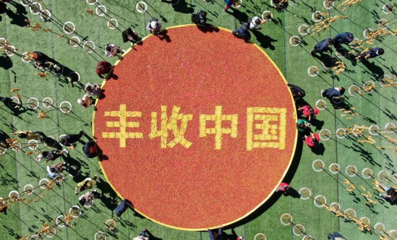 """河南洛阳""""摘""""油条庆丰收"""
