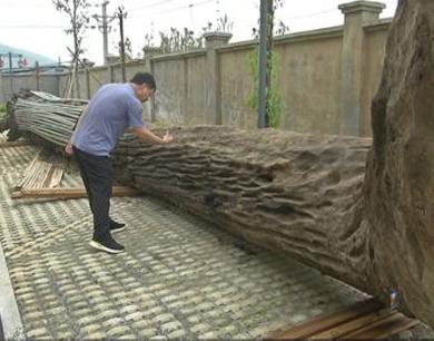 萍乡一工人挖出约十吨珍贵乌木