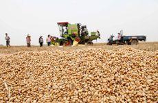 西安开展第39个世界粮食日及全国粮食安全宣传周活动