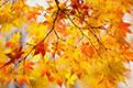 秋天不能少了