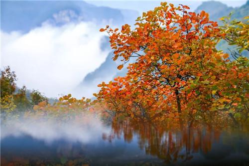 云台山红叶大幕已拉开 满山红叶即将迎来最美时