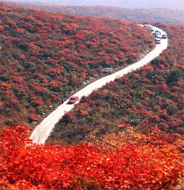 焦作青天河十万亩红叶美如画