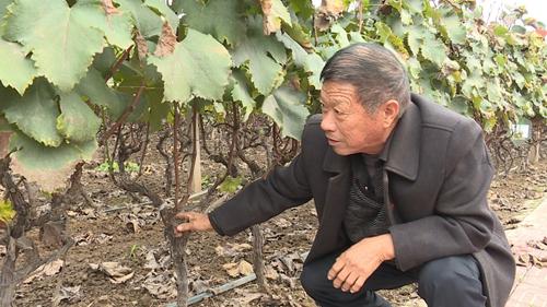 鲁山张平洋:依托葡萄种植?带领