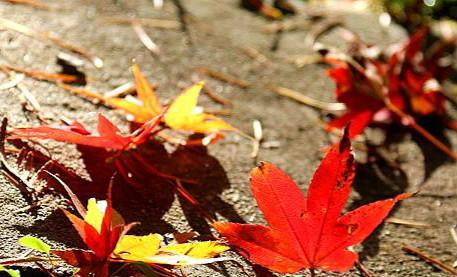 红、橙、黄、绿…… 秋风起庐山绚丽多彩