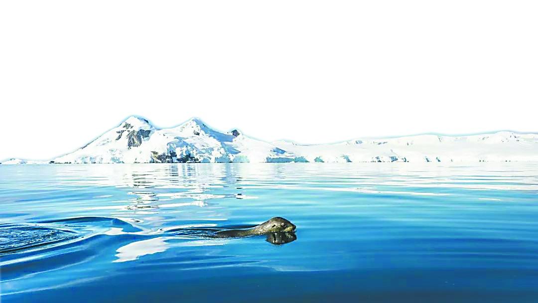 """一定牛江苏快三:青海湖旅游攻略地图:漂浮20余年南极冰山""""闯入""""阻断觅食路线万企"""