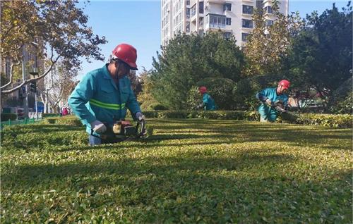 青岛市园林绿化养护管理现场观摩会在李沧区召开