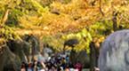色彩斑斓 金陵古道染秋色