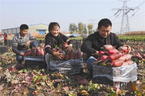 玉田:特色蔬菜产业成为结构调整
