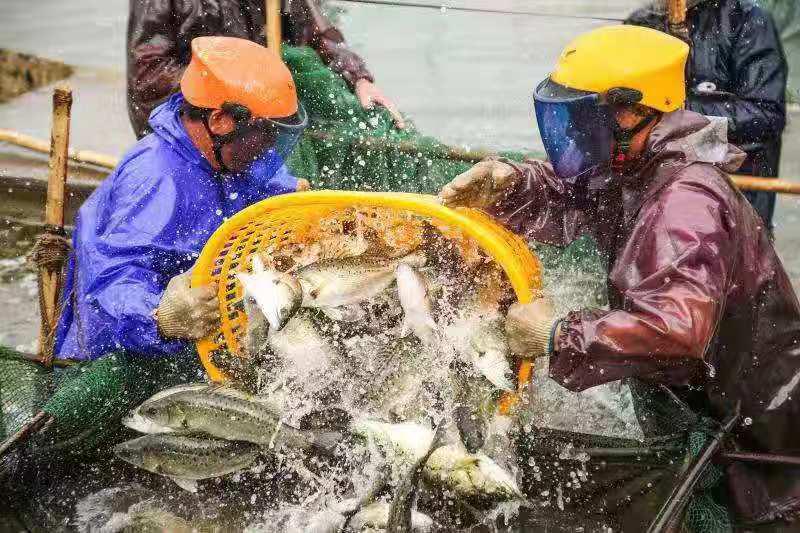 珠海将迎中国海鲈之都授牌大会 提升产销能力和知名度