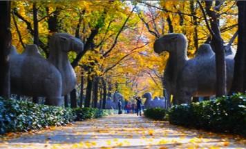 明孝陵中的石碑秘密牵出一段传奇历史