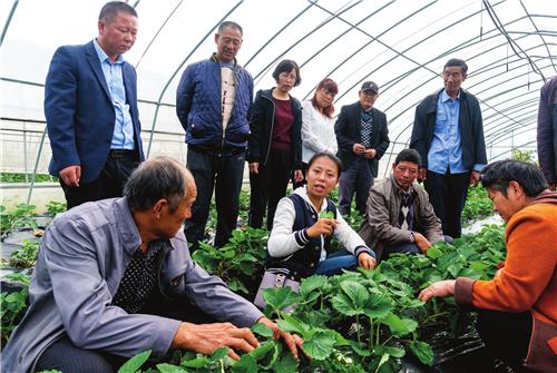 滁州:精准扶贫 专家将技术送到田间地头