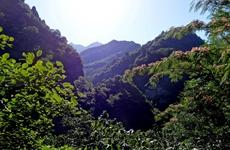 秦岭地区涉及各类保护区170个矿业权已经全部退出