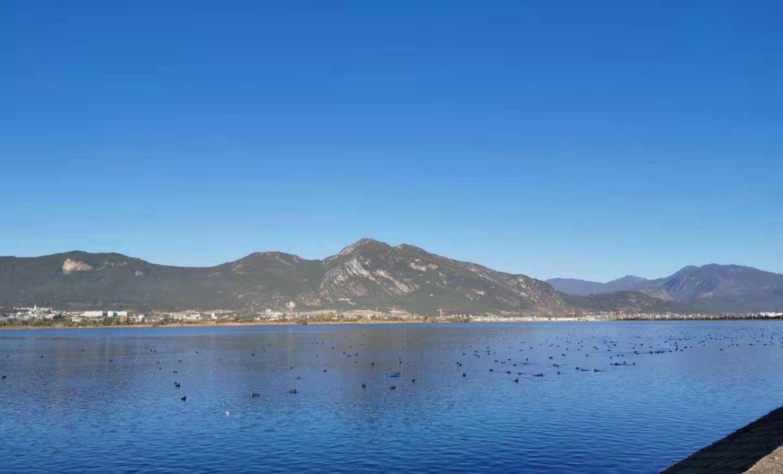 冬季 它们成群结队到丽江来看海