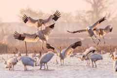 候鸟飞抵鄱阳湖越冬