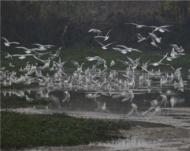 巢湖:凛冬已至 花塘河湿地里生机一片