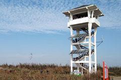 首届鄱阳湖国际观鸟周