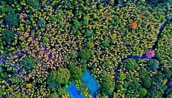 航拍江西大余丫山层林尽染 色彩斑斓美如画