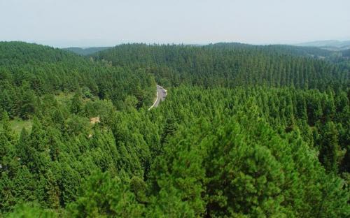 5分排列三5分排列三计划 造林绿化工作部署2020年营造林1670万亩