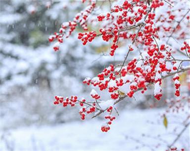 每天一分钟 知晓安徽事|安徽降雪大幕正式拉开 将持续到16日