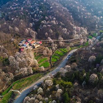 金寨玉兰谷景区于3月6日正式开放