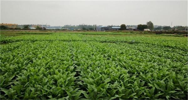 """广州多年人均水资源量低于600m 属缺水型城市""""class="""