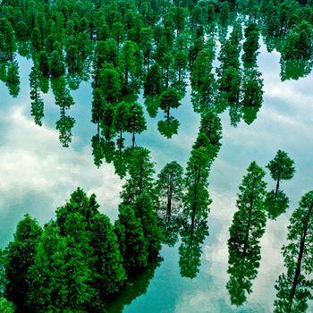 水上森林 鸟儿天堂