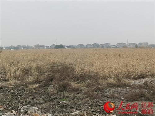 苏州吴江围湖造地上千亩 整改耗