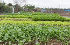 西安市在田蔬菜面积达5万多亩 确保农配资 供给不断档