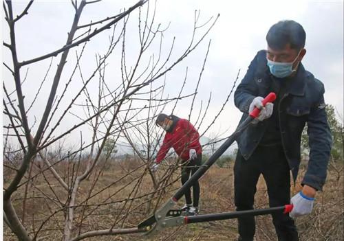 铜陵市义安区:疫情防控和春耕备
