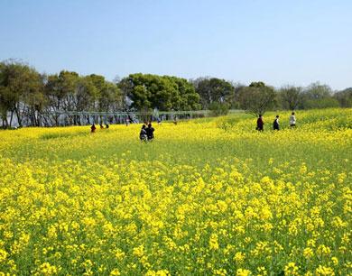 阳春三月春风暖 花红柳绿袭人间