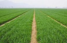 陕西省小麦长势略好于上年同期 【article】锈【disease】防治需重视
