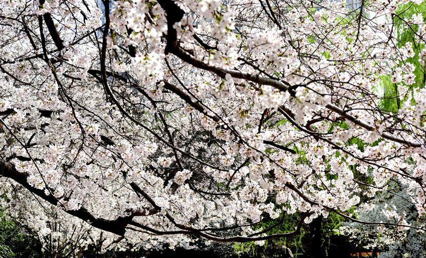 郑州:赏花享春光